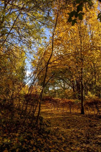 Autumn Colour Tree Plant Beauty In Nature Autumn Growth Tranquility Nature No People Land Tranquil Scene Scenics - Nature Non-urban Scene Sunlight Change Outdoors Day Branch Plant Part Low Angle View Forest