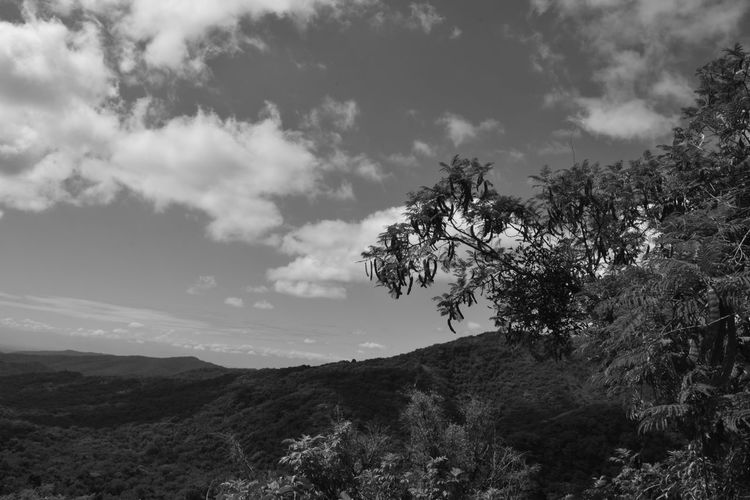 Beauty In Nature Black And White Black And White Photography Black And White Scenery Branch Cloud - Sky Countryside Day Growth Landscape Lush Foliage Majestic Mountain Mountain Range Nature No People Outdoors Remote Scenics Sky Solitude Tranquil Scene Tranquility Tree Valley