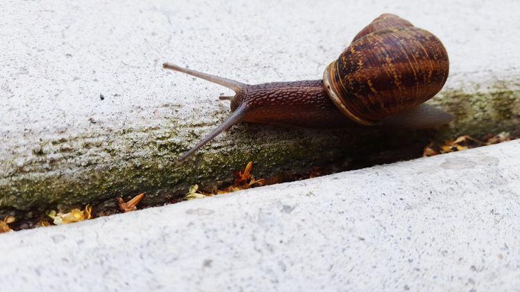 Slug Animal Slow Stick EyeEm Selects Slug Close-up Snail First Eyeem Photo Wild Animal Slimy Slippery