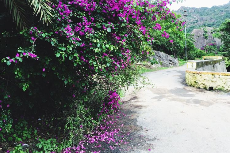 Plant Flower Growth Nature Beauty In Nature Day Outdoors Flowerbed No People Flora Leaves On The Ground Leaves Changing Color Fallen Leaves Along The Path Fallen Down Fall Beauty