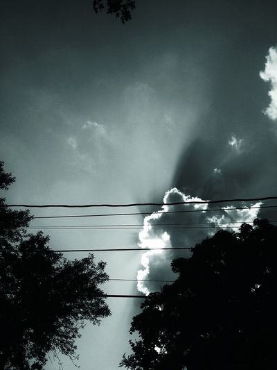 Cloud Cloud - Sky Cloudy Day Growth High Section Idyllic Looking Up Low Angle View Majestic Nature No People Noir Noir Edit Outdoors Overcast Power Line  Power Supply Scenics Sky Sunbeams Tranquil Scene Tranquility Tree Weather