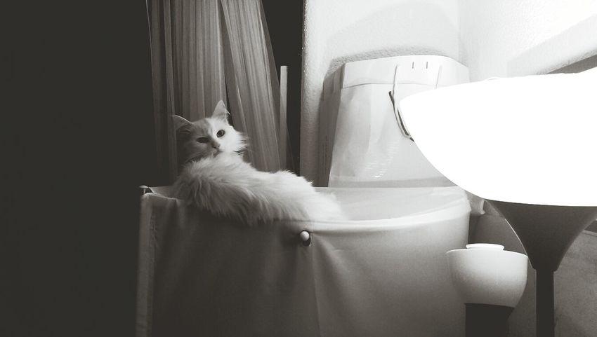 Interior Black And White Beautiful Light Cat
