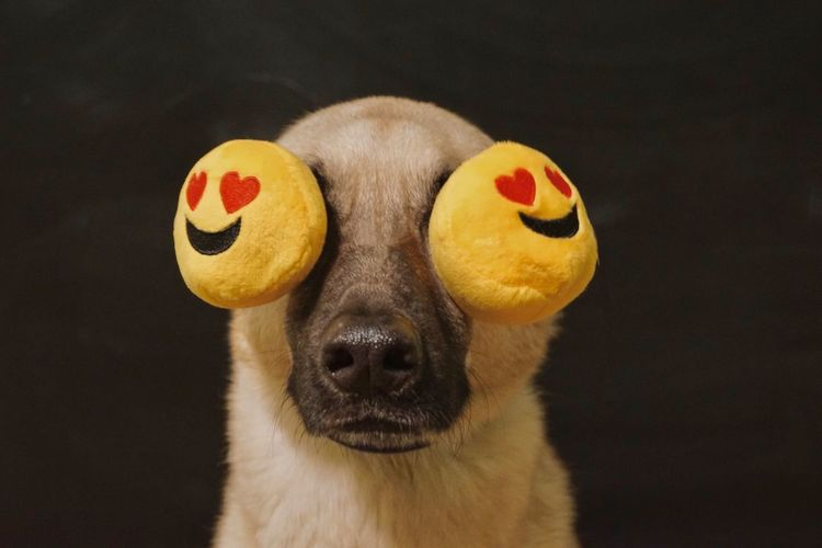 Close-Up Of Dog With Emoticons