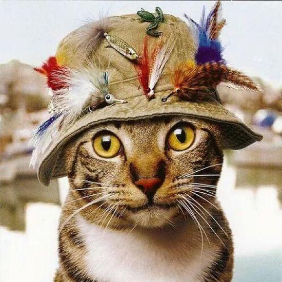 Yakışıklı Sevimli ŞapkalıKedi Pisipisi