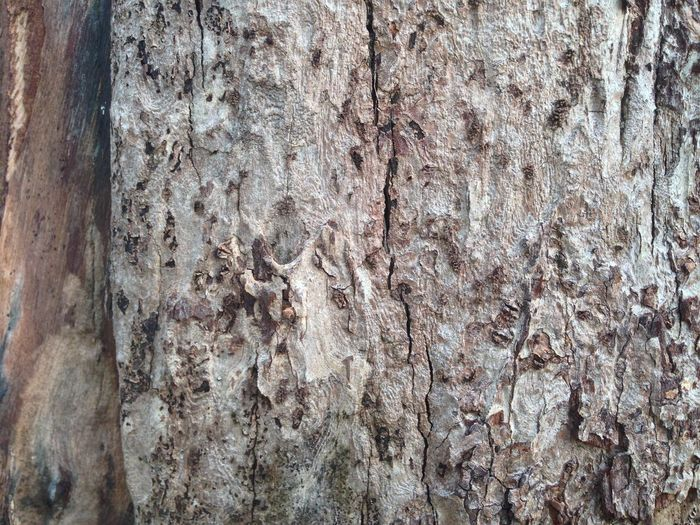 Backgrounds Bark Built Structure Close-up Day Full Frame Natural Pattern No People Old Outdoors Pattern Plant Plant Bark Rough Textured  Tree Tree Trunk Trunk Wall - Building Feature Weathered Wood - Material Wood Grain