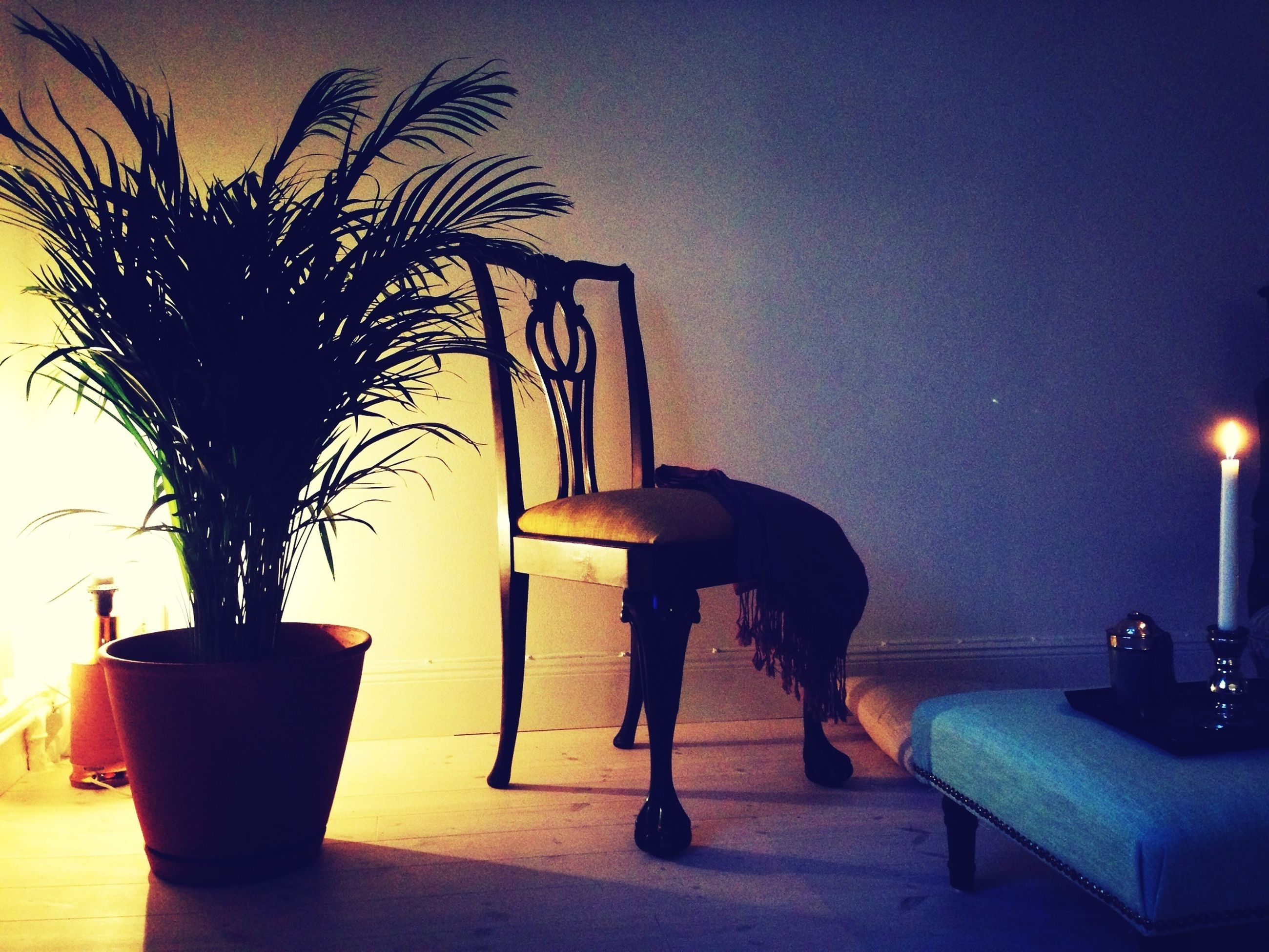 illuminated, indoors, table, domestic animals, potted plant, animal themes, palm tree, one animal, lighting equipment, chair, home interior, pets, silhouette, copy space, mammal, no people, night, sky, built structure, house
