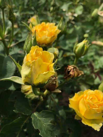 Flower Flowering Plant Plant Fragility Vulnerability  Beauty In Nature Freshness Plant Part Petal Flower Head