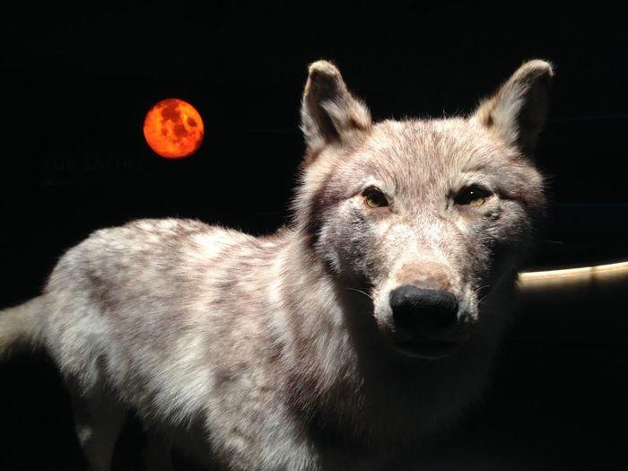 Close-Up Portrait Of Dog At Night