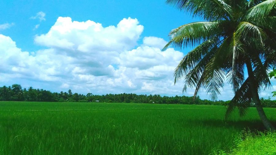 Field Nature Sky Beauty In Nature No People Outdoors Nature Photography Nature_collection Nature Makes Me Smile Nature Harmony Nature Is Art Naturesbeauty Nature_collection Landscape_collection EyeEmNatureLover Natureporn View Viewpoint Nature The Greatest Artist Naturephotography Nature Lover Nature_perfection Beauty In Nature Nature Ricefield Ricefield View Skyporn