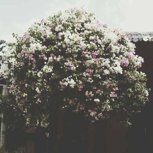 Villa Escudero Philippines Flowers Flower Photography
