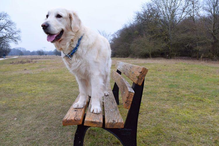 Dog Sitting On Bench At Park