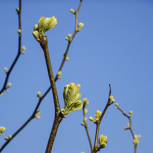 Close-up of stems against clear blue sky