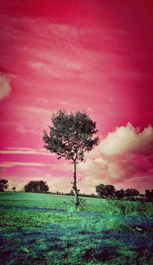 Chez les télétubbies... Itsapinkworld Pink Landscape Clouds And Sky