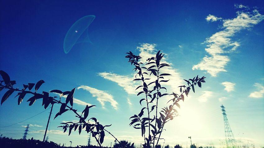 Autumn Sky_collection Sky Autumnsky Blue Sky Sky Photography Skyview ?