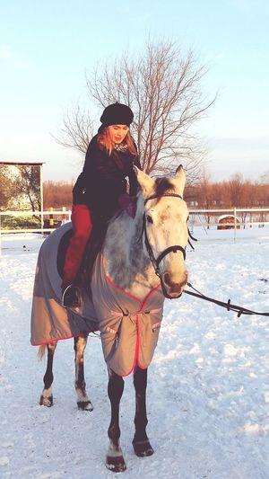 Лошади,жизнь.