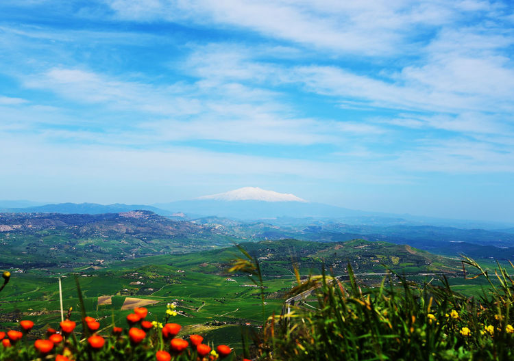 Agriculture Beauty In Nature Cloud - Sky Etna Farm Field Flower Grape Growth Italy Landscape Leaf Mountain Nature No People Outdoors Plant Plantation Rural Scene Scenics Sky Tranquil Scene Tree Volcano Wine