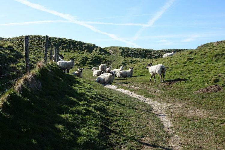 Horses grazing in a farm