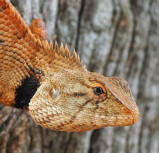 Reptile Tree Close-up Lizard Exotic Pets Iguana Bearded Dragon Hedgehog Null Costa Rica Animal Scale Chameleon Gecko Animal Skin Quintana Roo Animal Eye Madagascar  Central America Ecuador