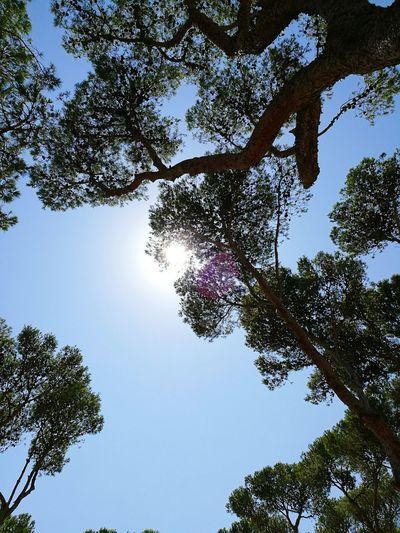 Pals, platja, girona, espagne. Girona Spain ✈️🇪🇸
