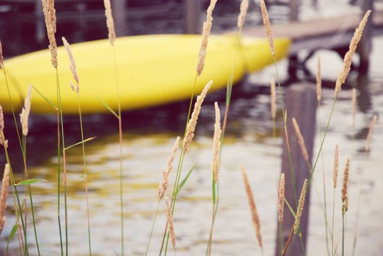 Oh to be out on the Lake! Water Reflection Beauty In Nature EyeEmNewHere Outdoors Nature Day Close-up No People Focus On Foreground Canoe Pier Lake Living Summer ☀ Waterfront Yellow Color Yellow Canoe Grasses Breeze Summer Activity