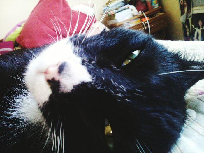 Cat Popocho