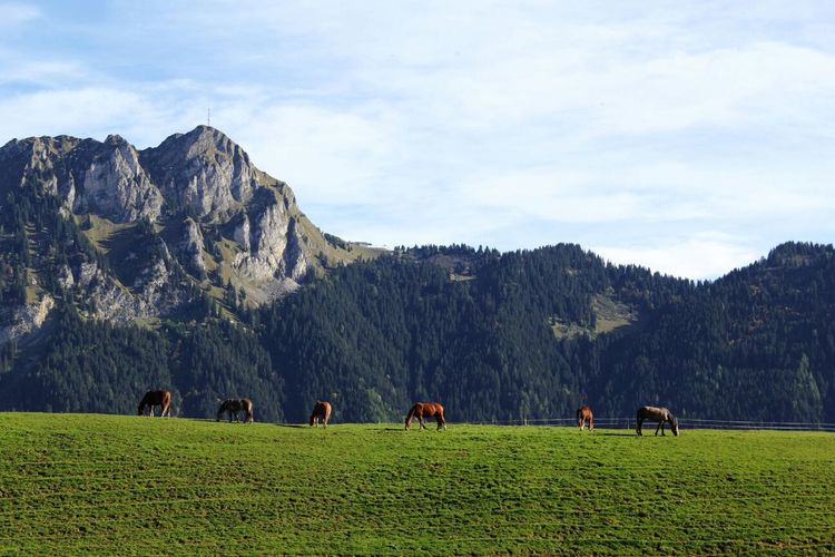 les chevaux du manège EyeEm Nature Lover Streamzoofamily Nature Mountain