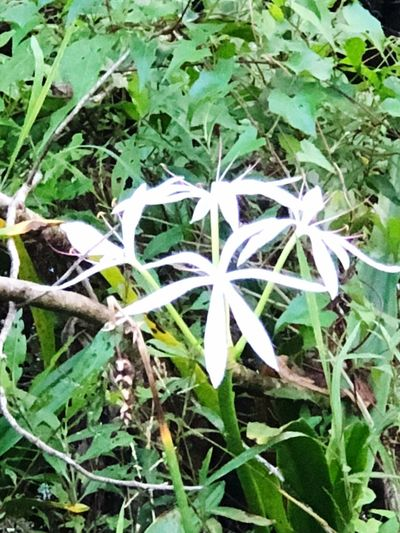 Nature Plant Growth Fragility Outdoors Green Color Flower Leaf Day No People Beauty In Nature Freshness Flower Head Close-up