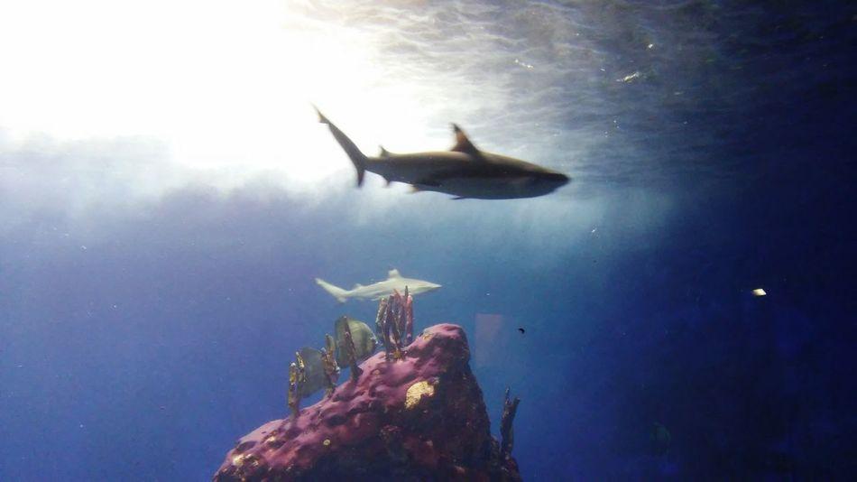Shark Zoo Day Aquarium