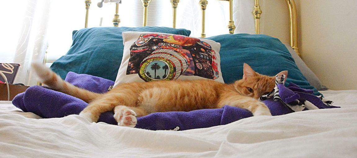 Cat naps Cat