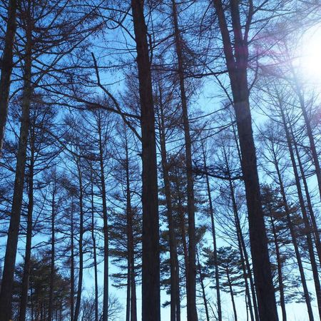 空 今日の空 My Sky 青空 Nagano, Japan 信州 Nature 冬の景色 EyeEm Nature Lover Tree 木