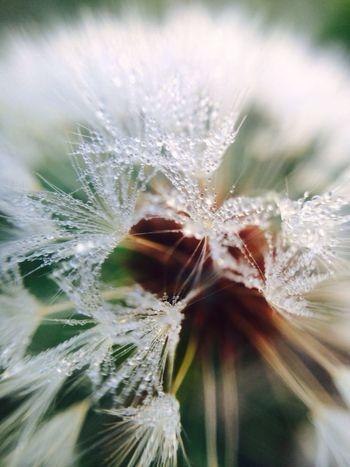 EyeEm Nature Lover Macro Photography Olloclip_macro Macro