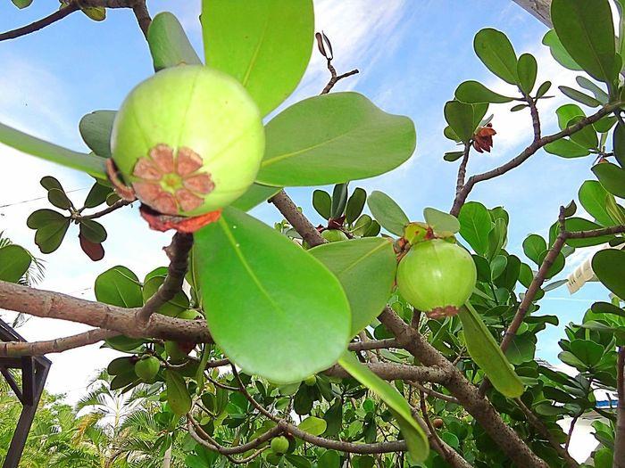 Nature fruite