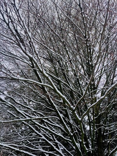 Tree and snow Full Frame Plant Backgrounds Pattern No People Low Angle View Tree Nature Winter Tranquility