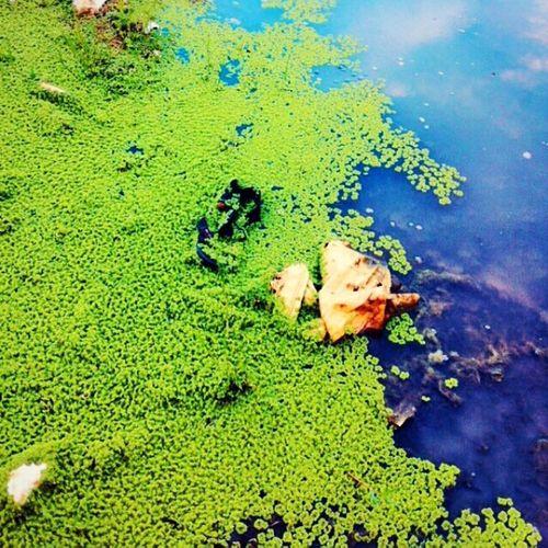 Stop Polluting Make A better world nature kochi