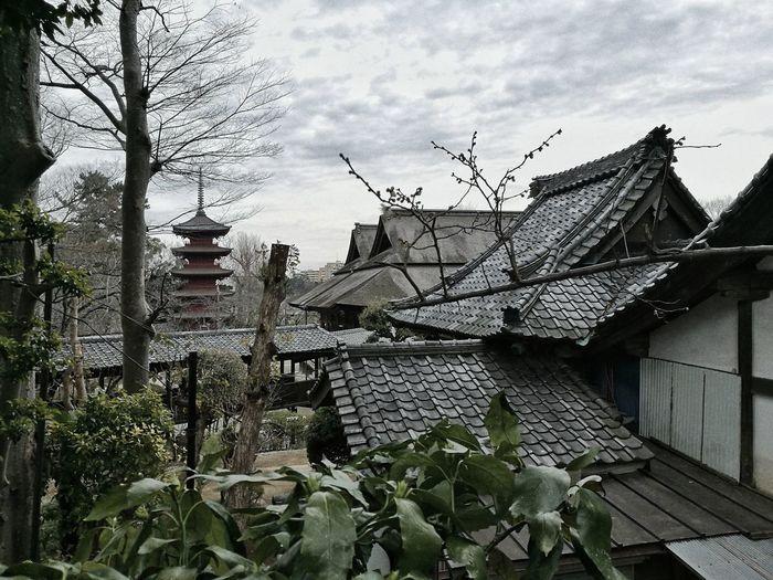 Landscape Of
