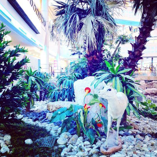 Colour Of Life Shot HuaweiP9 Plants Animal Riyadh Leicacamera