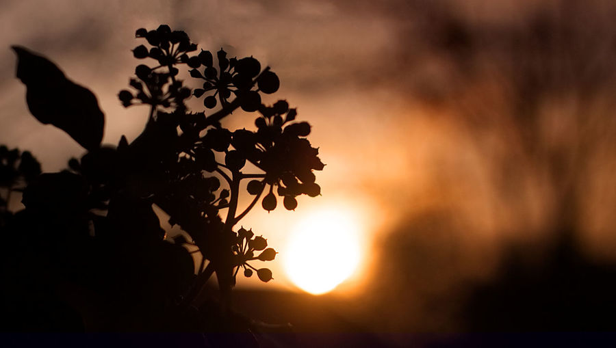 Sunset Silhouette Nature Sun Sunlight Heat - Temperature Social Issues Beauty In Nature Landscape Outdoors No People Sky Tree Day Close-up