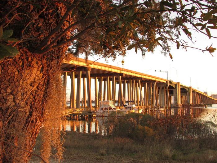 Tranquil Scene Outdoors Marina Light Bridge Around The Trees Showcase: February