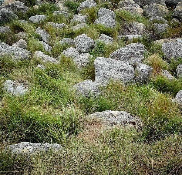 Rocks Grass Haumoana As_archive Rebelsunited_nature Rsa_nature Ig_masterpiece Tt_rt_nature Universalviews Natureromantix Ig_globalclub