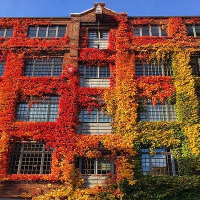 Herbst Herbstfarben Autumn Autumn Colors Hamburg Winterhude Architecture Old Building City Life Red Green Yellow