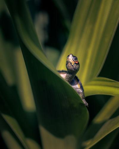 Small tortoise taking sunbath in a garden