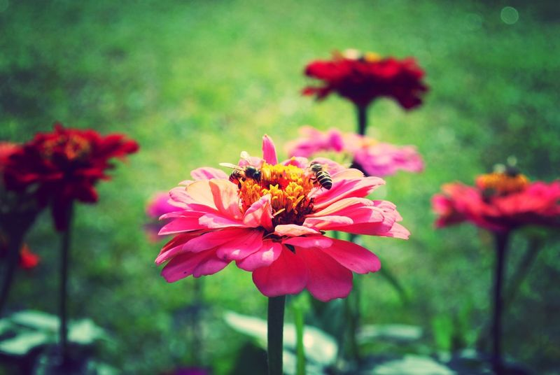 Good Morning! Flower Flower Head Bees And Flowers Insects