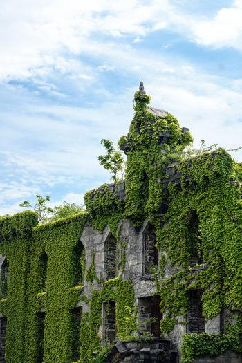 Plants growing in old ruins against sky