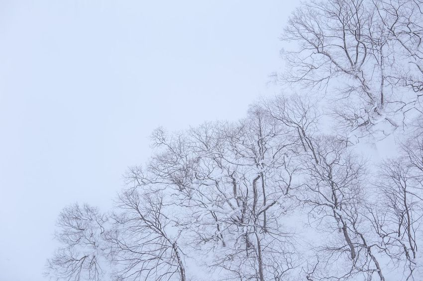 Bare Tree Nature Branch Tree Beauty In Nature Day Outdoors Winter Snow No People Cold Temperature