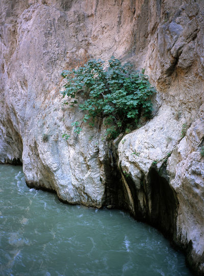 Canyon Fig Fig Tree Nature River Rock Saklikent Saklikent Canyon Saklıkent Saklıkent National Park Travel Destinations Tree Turkey