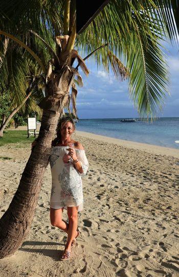 Beach Tree Palm