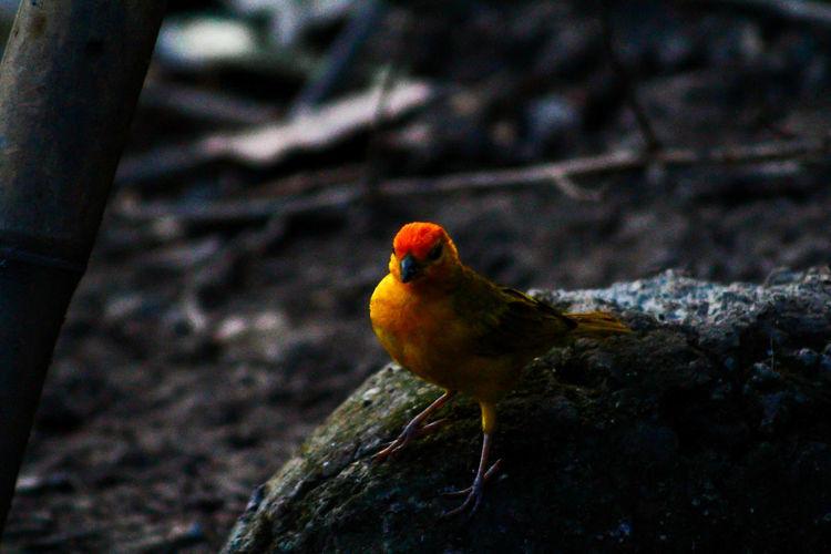 Bird Bird Perching Red Tree Winter Close-up Animal Themes