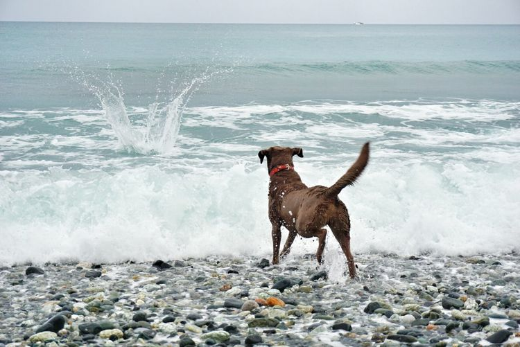 Rear view of dog against wavy sea