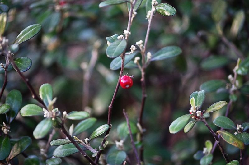 Growth Nature Plant Close-up Beauty In Nature Freshness Red No People Flower Fragility Tree Nature On Your Doorstep One Red Berry