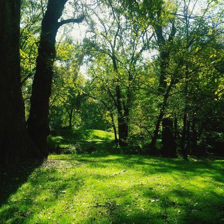 Silence. Woods Summer Nature